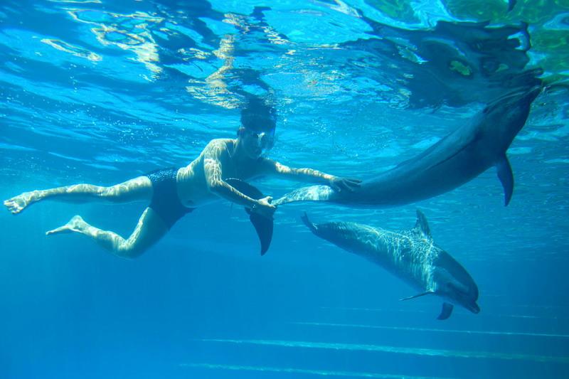 深圳野生动物园海洋天地现已隆重开业 特价套票125元