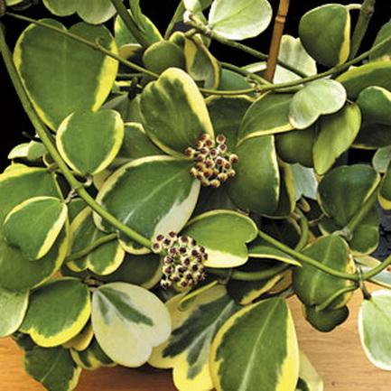 植物盆ps平面素材