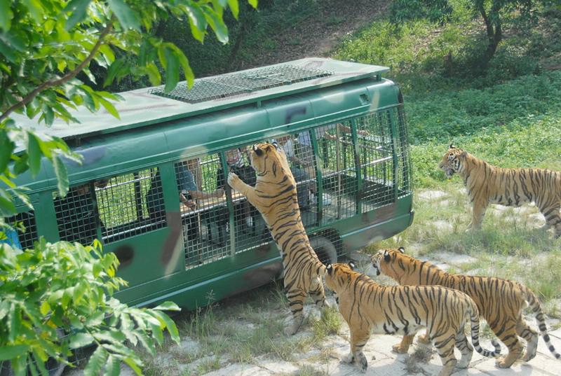 有关深圳动物园的绘画