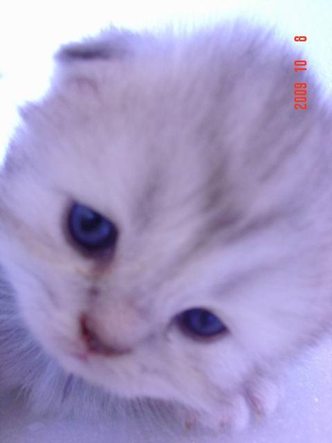 可爱豆眼猫咪头像