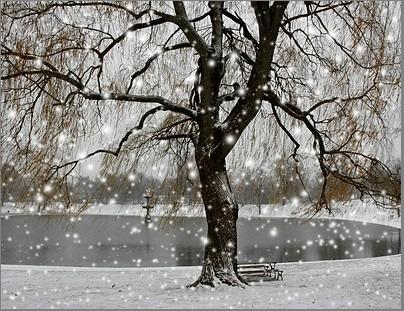 雪花的梦; 第一场雪; 雪つ风景闪图 p20