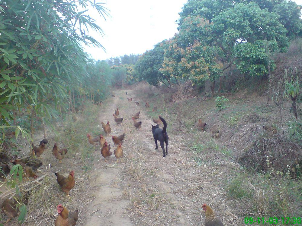 我的生态农场 - 深圳房地产信息网论坛