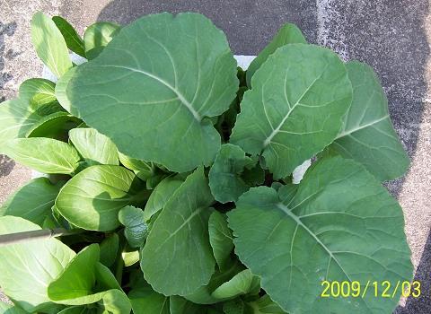 背景 壁纸 绿色 绿叶 树叶 植物 桌面 480_350