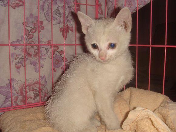 活泼可爱一个多月的流浪小白猫找领养了