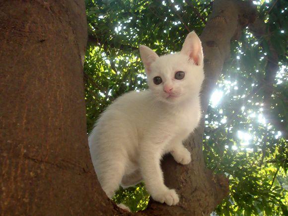 活泼可爱的不到两个月小白猫(流浪猫)找家了_家有爱宠