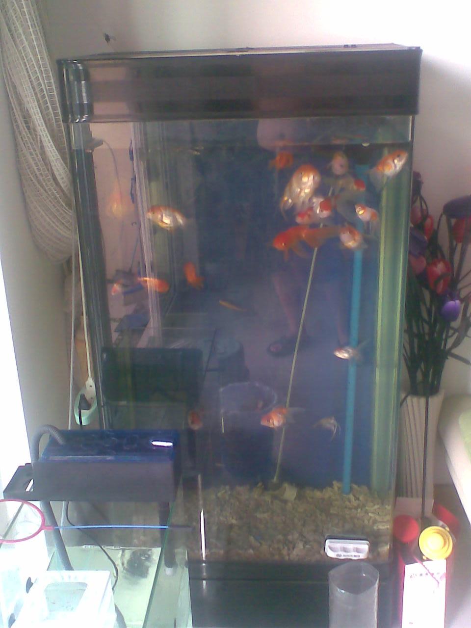 自制创意鱼缸图片