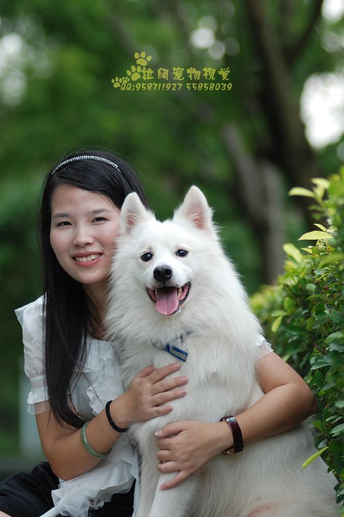 唯美宠物摄影,给爱犬的礼物