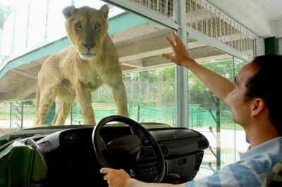2月5号深圳动物园团体票有