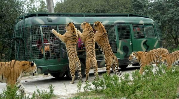 【深圳野生动物园】【深圳动物园】【深圳西丽动物园】超值特价门票