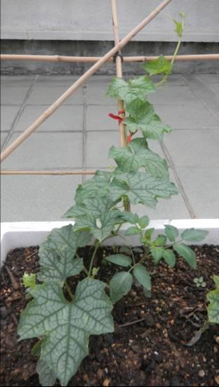 楼上的日子-天台种花种菜小记