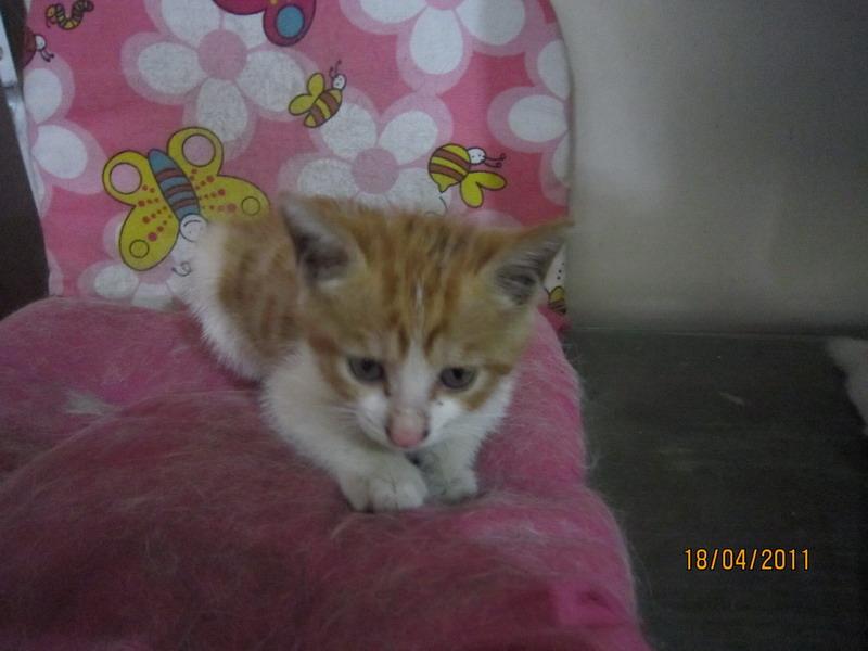 > 漂亮可怜的小猫求领养