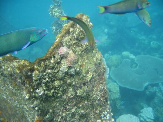 山山水水  > 马来西亚热浪岛----海底世界零