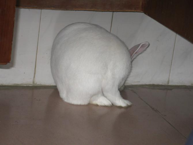 房网朋友送的大白兔,好可爱