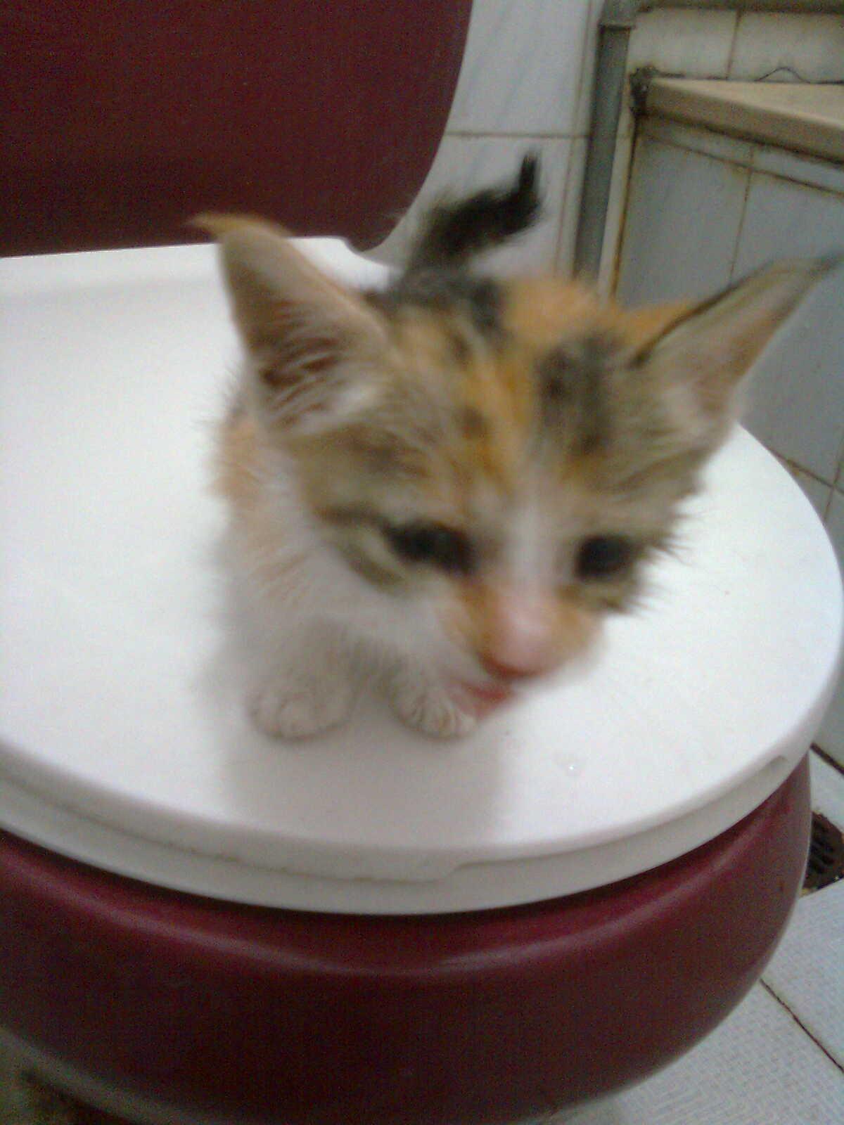 壁纸 动物 猫 猫咪 小猫 桌面 1200_1600 竖版 竖屏 手机