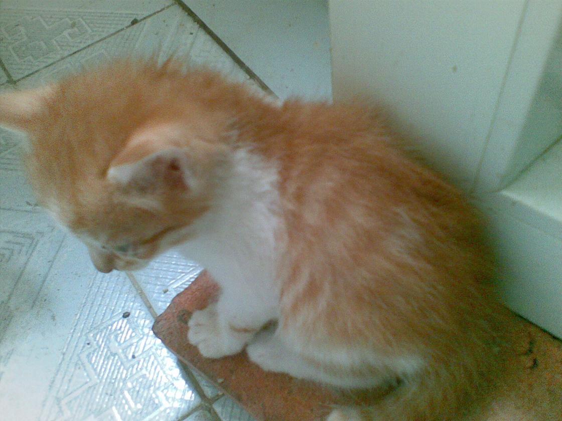 可爱的小猫猫找主人罗