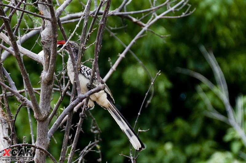 > 追寻荒野的呼唤 ----非洲南部野生动物行摄(转)