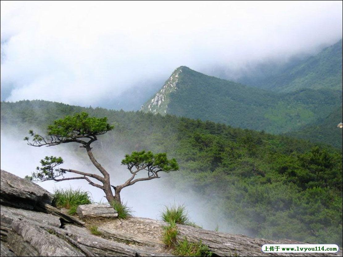 景岗山图片风景图片