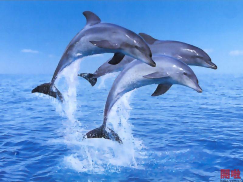 为了迎接海豚落户野生动物园,深圳野生动物园等五十多家单位联合举办