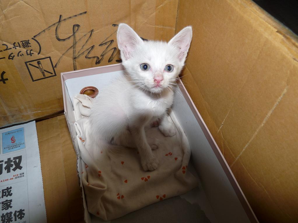 > 流浪的小白猫寻找新家