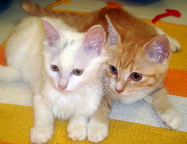 【原创】两只可爱小猫寻找新家!