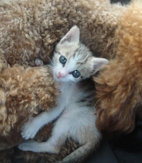 满月可爱猫mm寻找好心人收养
