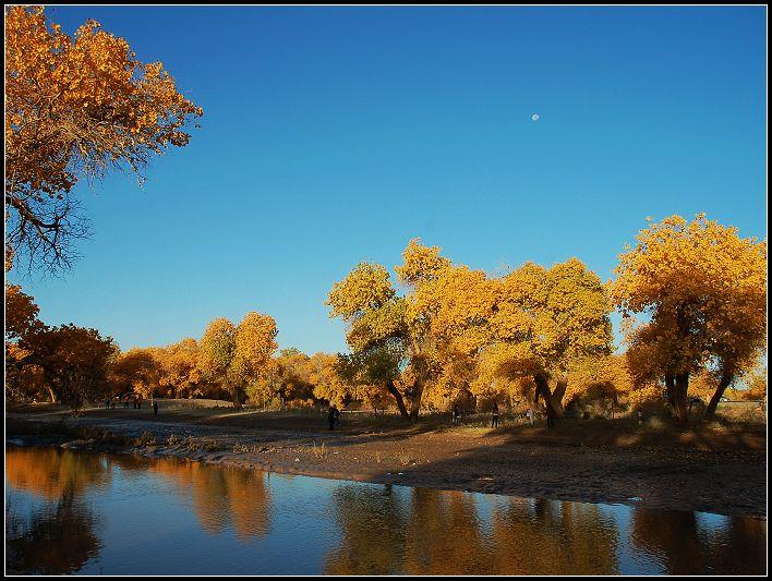 二道桥在金黄浓密的树叶间,如一幅廊桥的水彩画面.