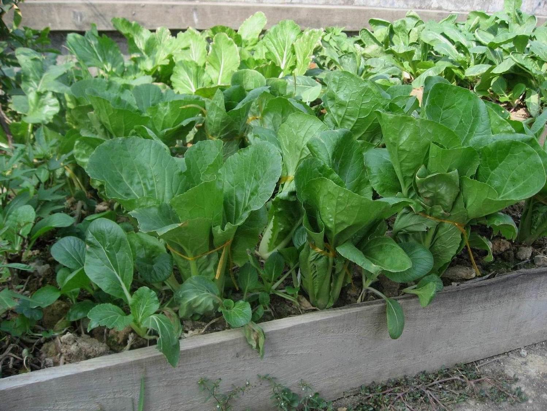 【夏天在哪里】夏天在我家菜园里~果园里图片