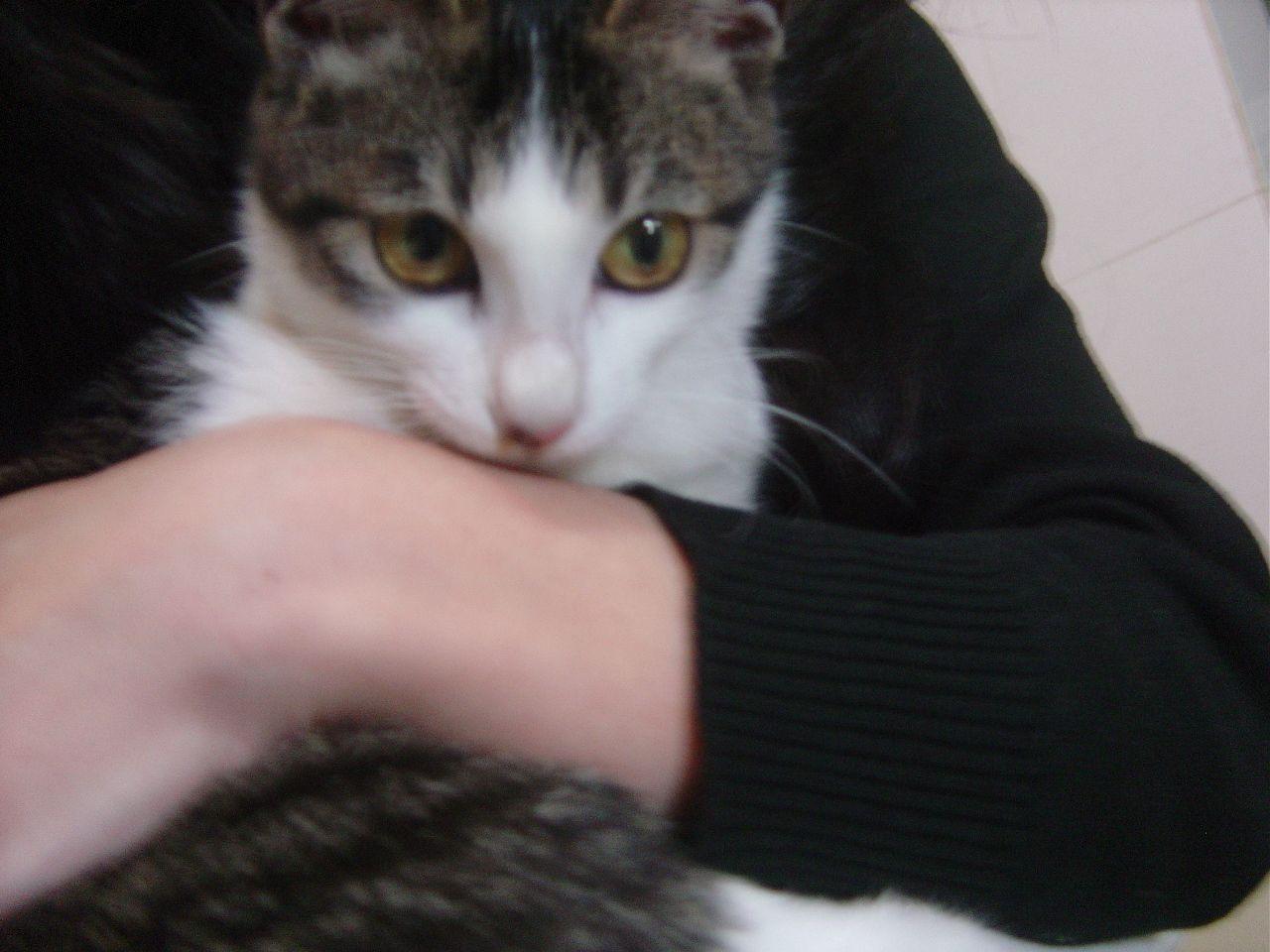 > 谁能收养这个小可怜 --一个月大的流浪小猫