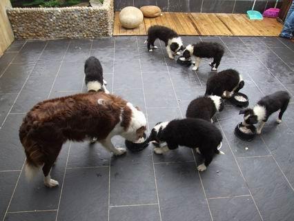 一群手绘猫猫图片