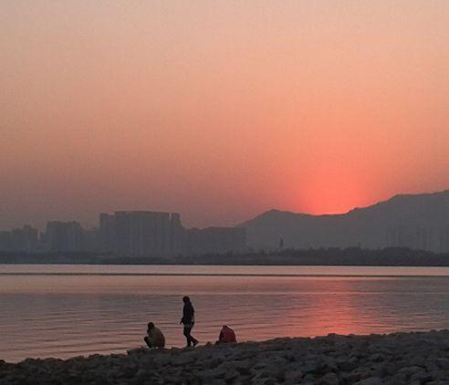 深圳湾公园由已开放的红树林海滨生态公园和建设中的