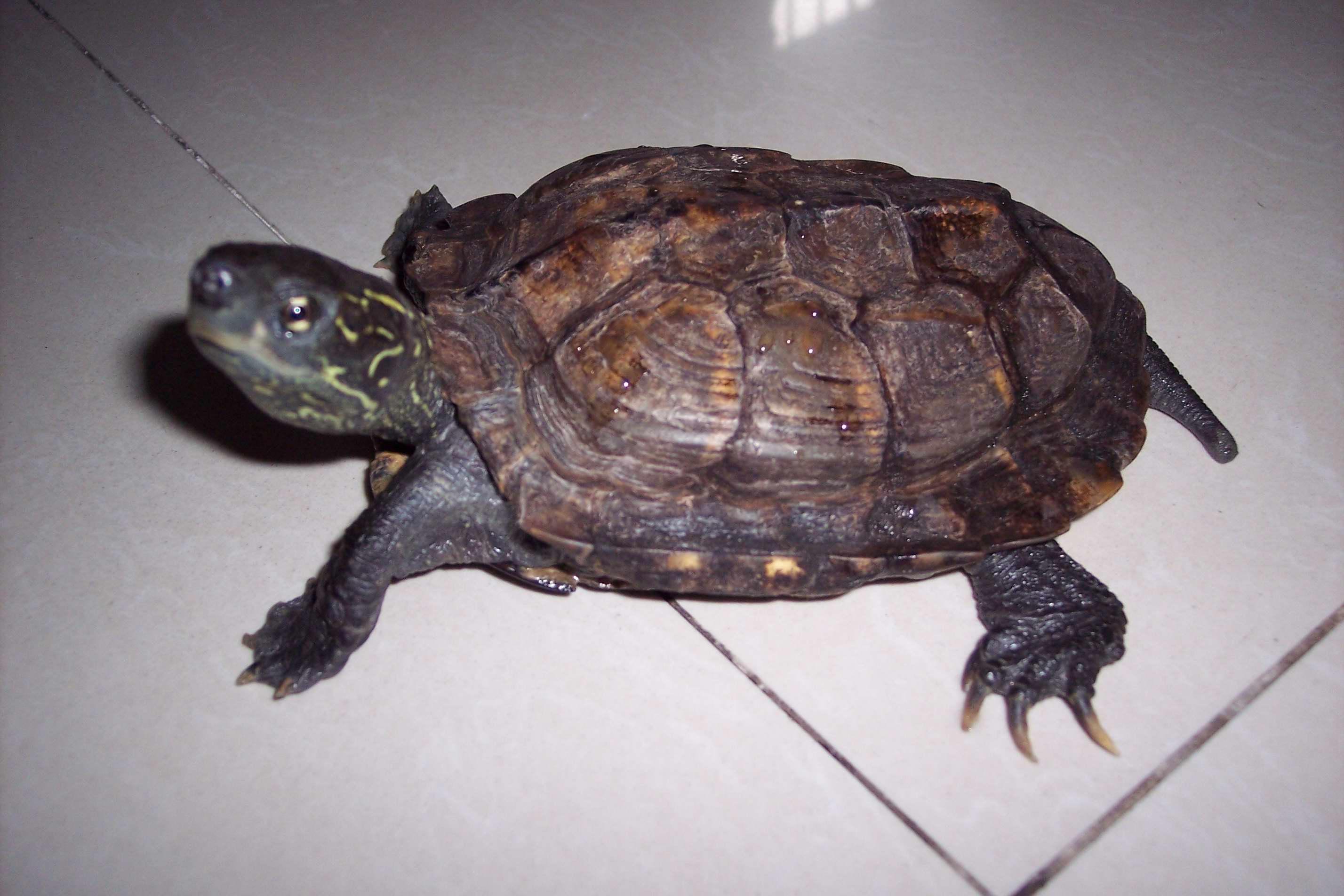 乌龟冬眠时期要吃东西和喝水吗