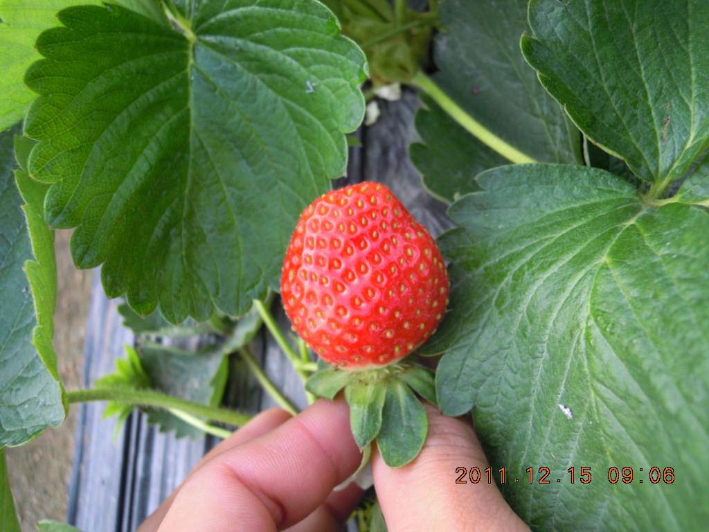 能不能发个你草莓园的地址