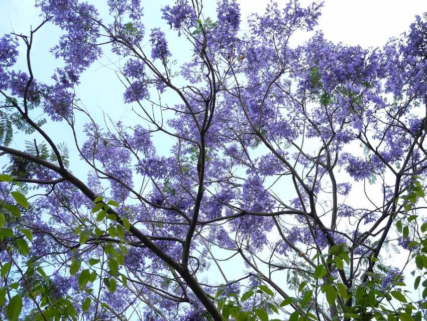 在苍劲老态的树干上竟能孕育出簇簇丛丛拇指般大小钟形花儿,更拥有