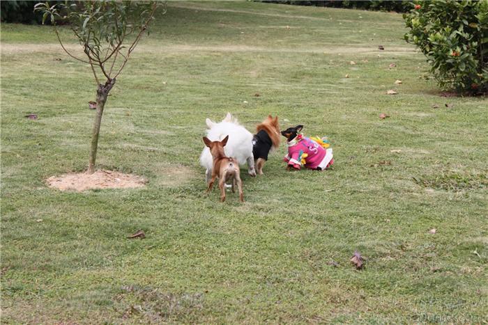 深圳你动物园动物集体照