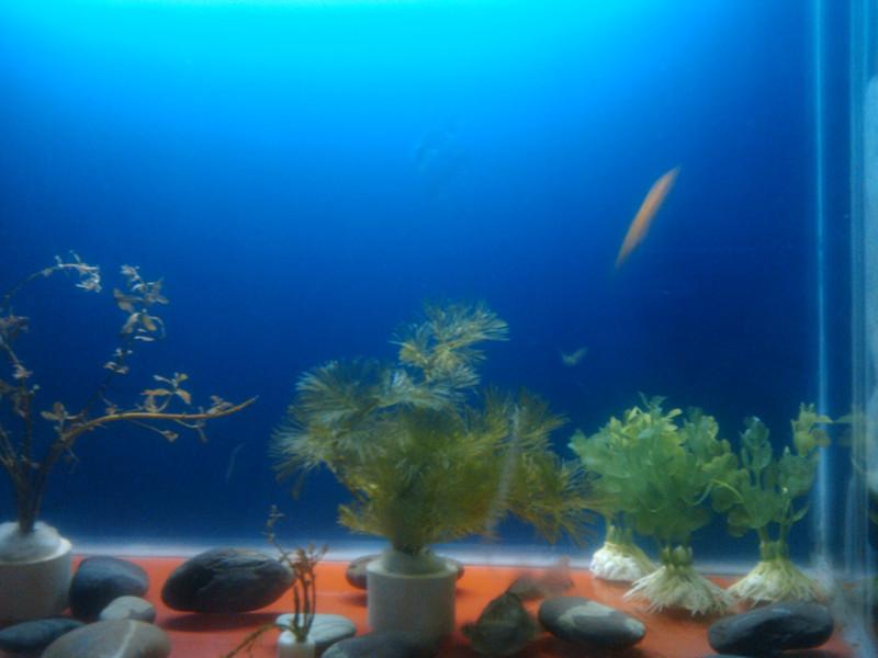 壁纸 动物 海底 海底世界 海洋馆 水族馆 鱼 鱼类 桌面 800_600