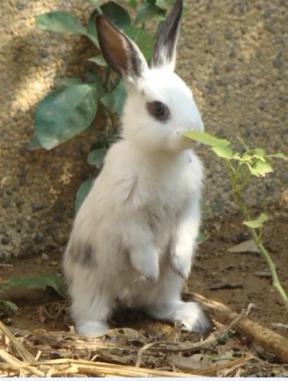 维达兔子 永恒之塔