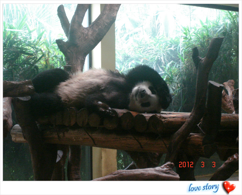 又到一年春游时—长隆野生动物园春游图记