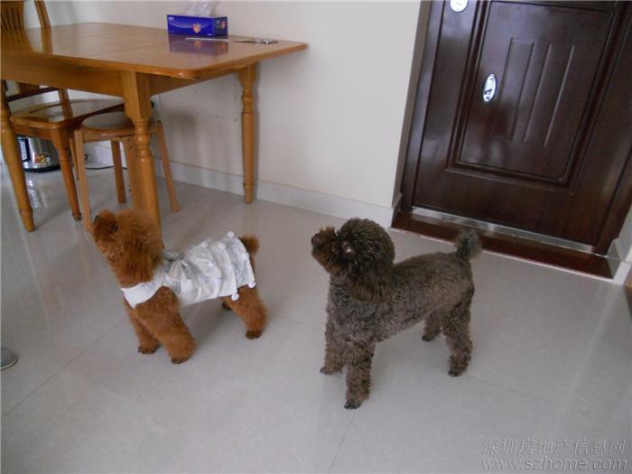 > 母狗生了四只小狗,纠结于留一只公狗还是母狗