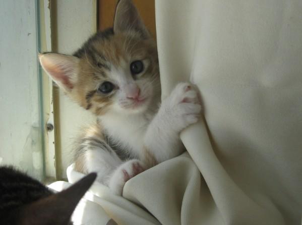 给可爱的小猫咪一个温暖的家