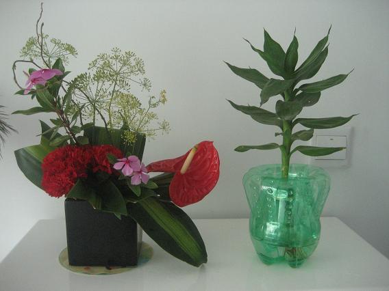 幼儿园自制可乐瓶小盆栽图片