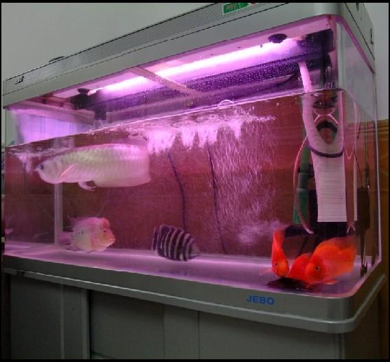1.2米佳宝鱼缸带底座,过滤桶