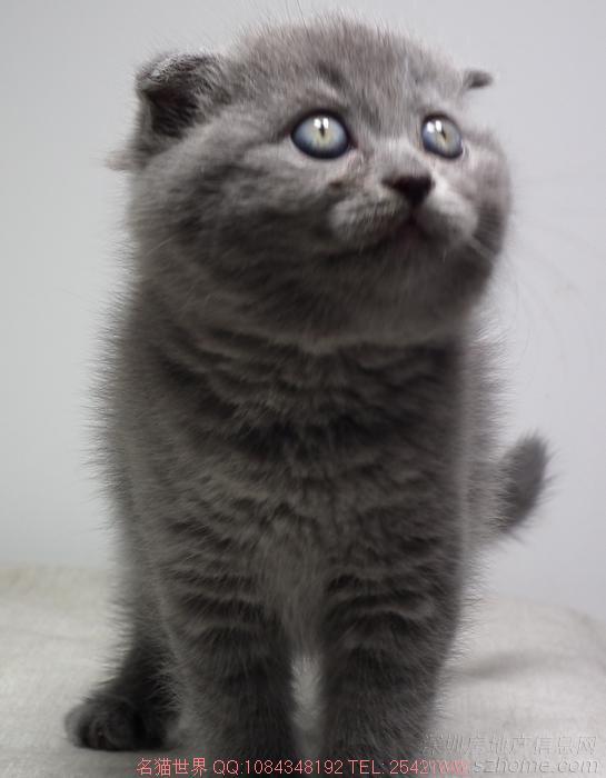 家里可爱名猫生小猫了