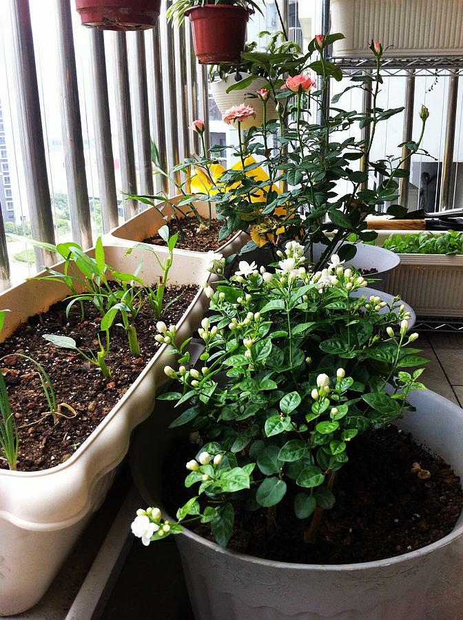 阳台上还种着些蔬菜和花卉图片