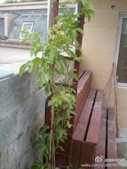 楼顶盆栽设计图