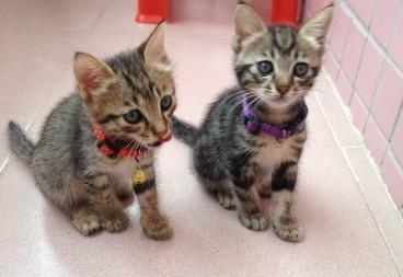 2只可爱的猫猫——寻找爱心主人!