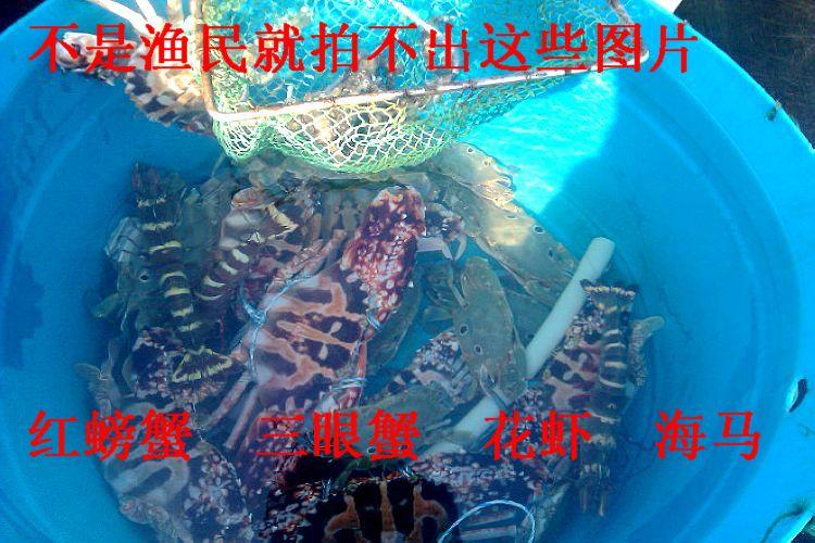 【视频】海底世界活海马你们见过吗?