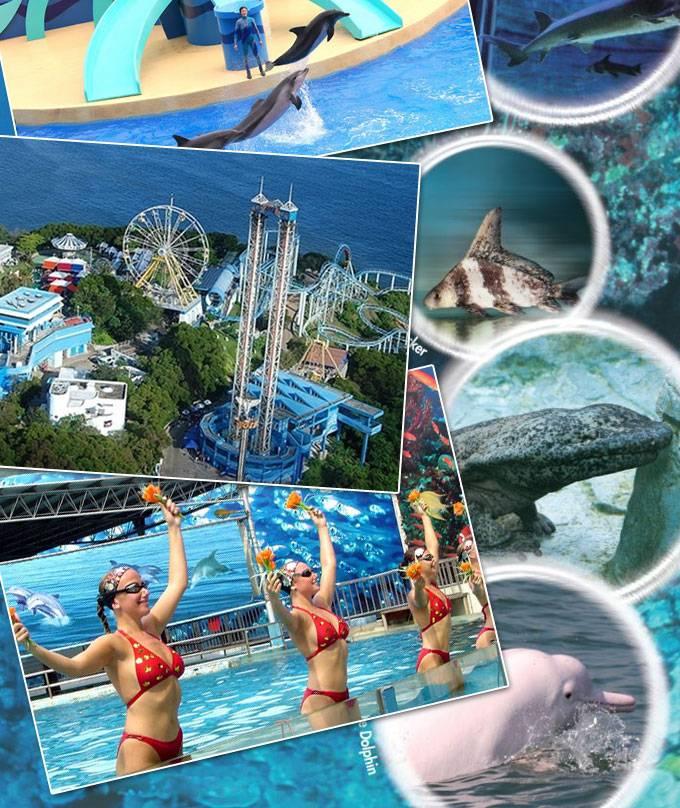后前往闻名世界的海洋公园(约3小时),这里有世界最大的水族馆,鲨鱼馆