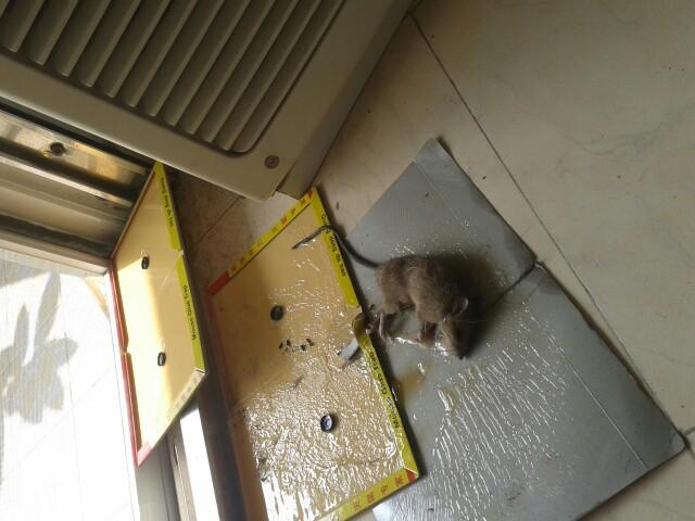 那些猫都不抓老鼠啦?每天呆在垃圾桶附件找剩饭剩菜?