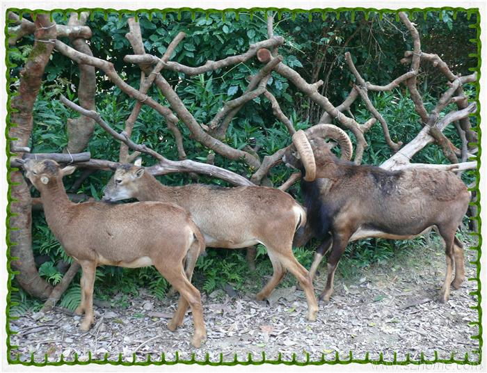 山山水水  > qinqin与野生动物的亲密接触——广州长隆香江野生动物园