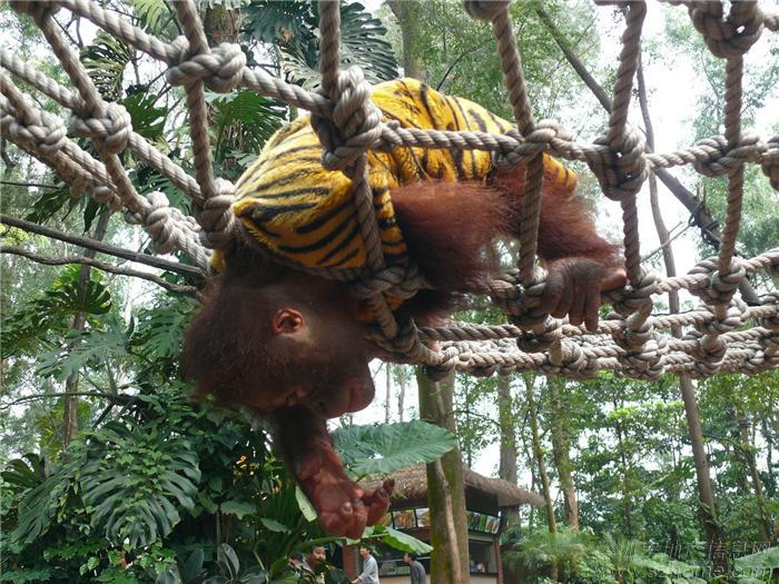 > qinqin与野生动物的亲密接触——广州长隆香江野生动物园欢乐之旅